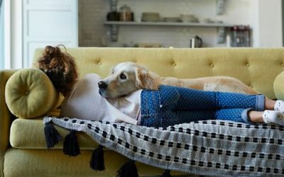 Why Pet-Friendly Homes Are in High Demand
